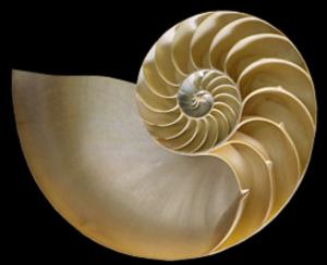 Nautilus80